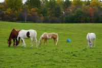 Equine Care & Management